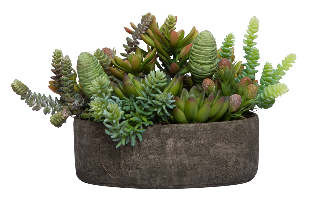 ASSORTED SUCCULENT IN BOWL