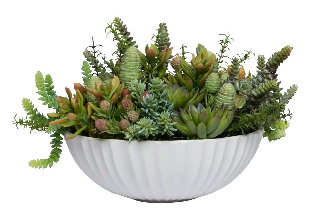 ASSORTED SUCCULENT IN WHITE BOWL