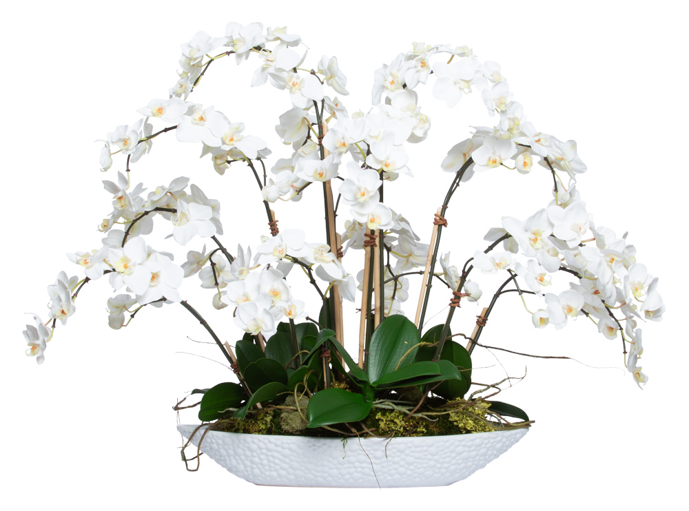 WHITE PHAL IN OVAL BOAT