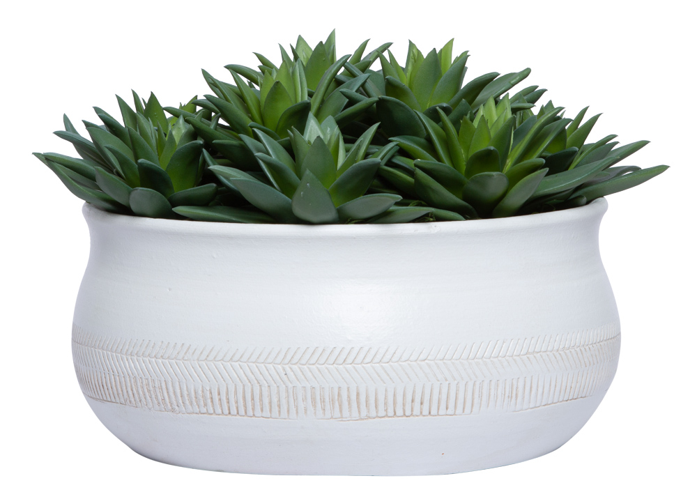 SUCCULENT IN LARGE WHITE BOWL