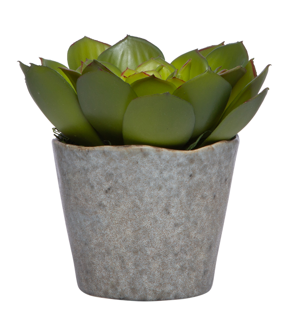 SUCCULENT IN GREY POT