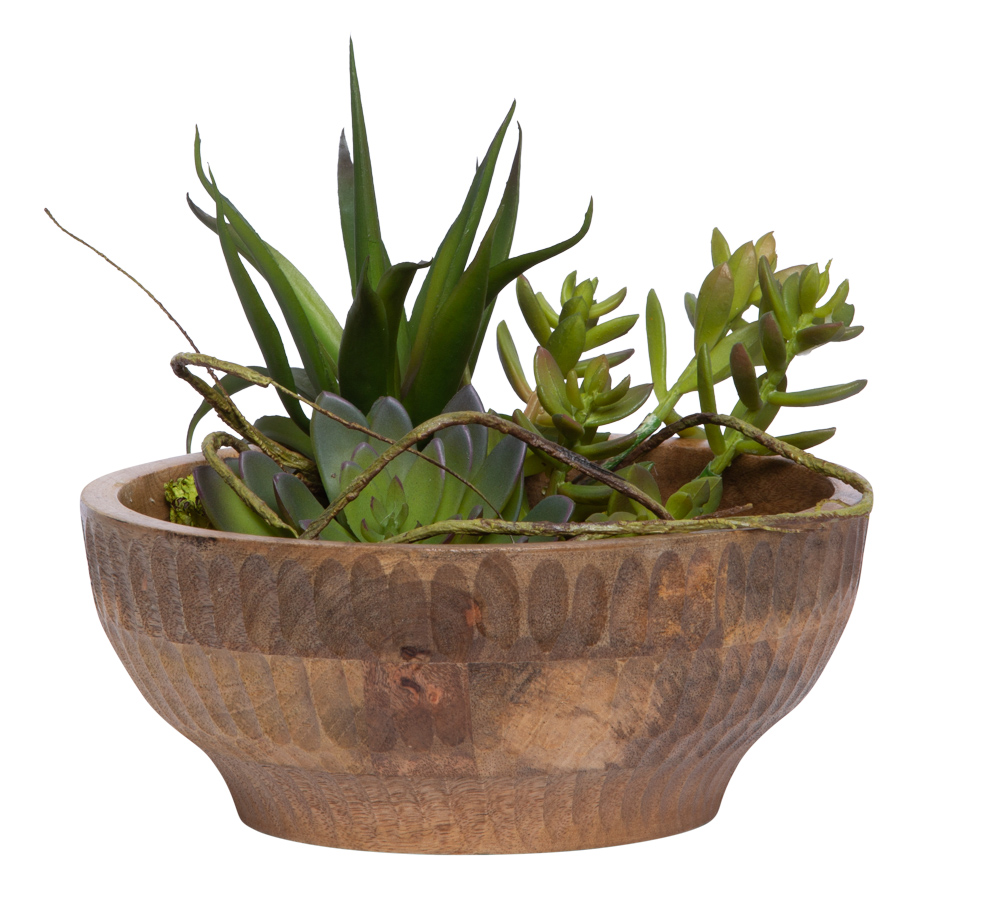 ASSORTED SUCCULENT IN WOOD BOWL