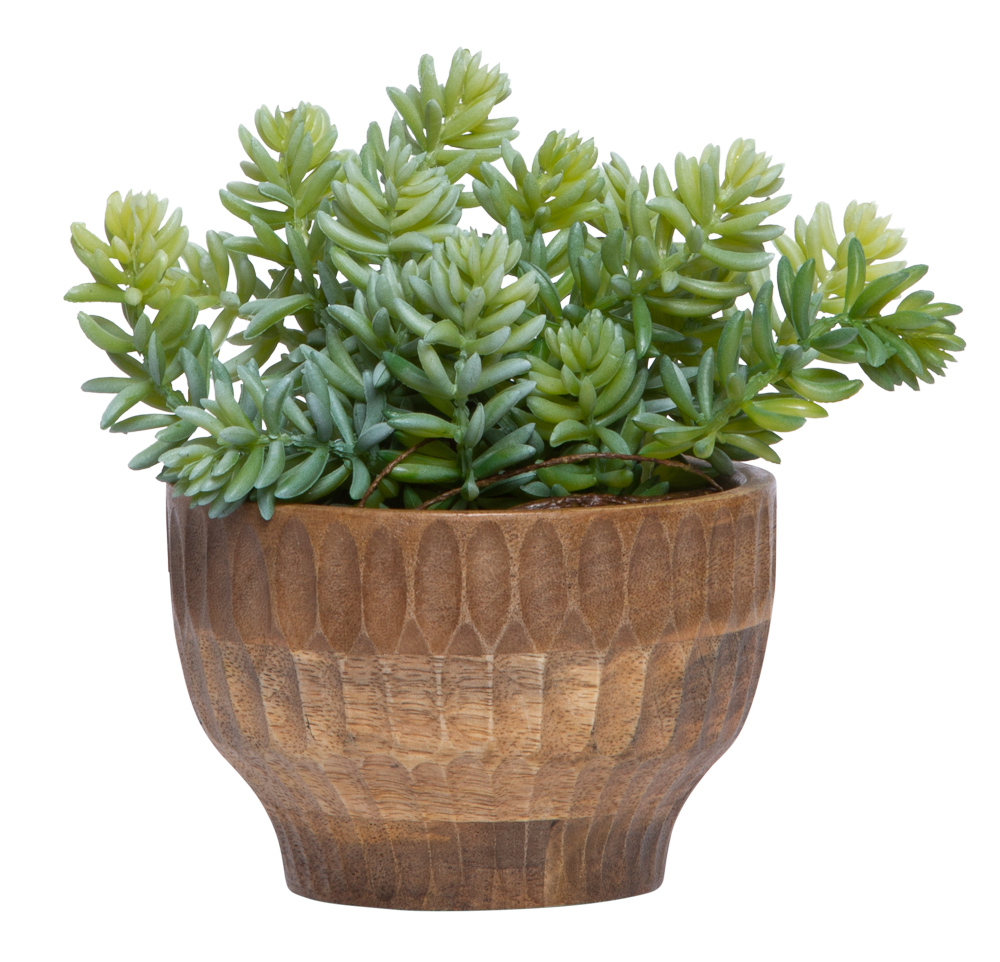 SEDUM/SUCCULENT IN WOOD BOWL