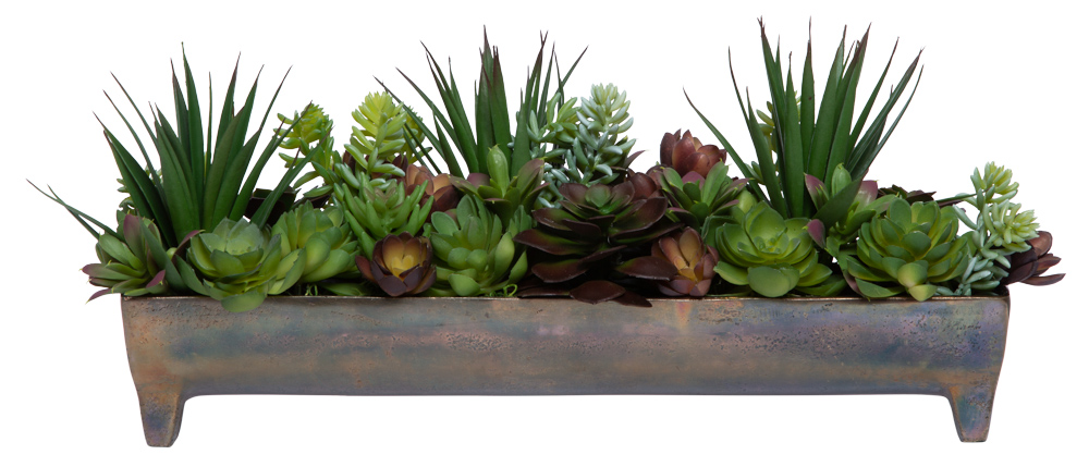 ASSORTED SUCCULENT IN BRONZE FOOTED TRAY