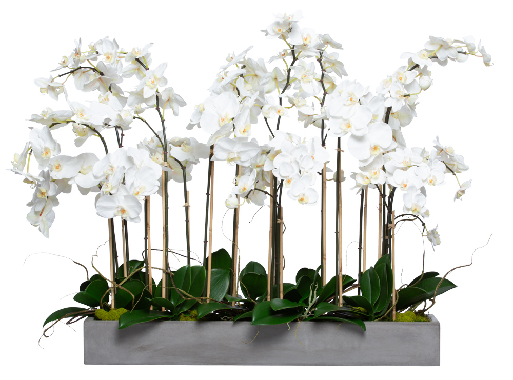 WHITE PHAL IN LARGE GREY PLANTER
