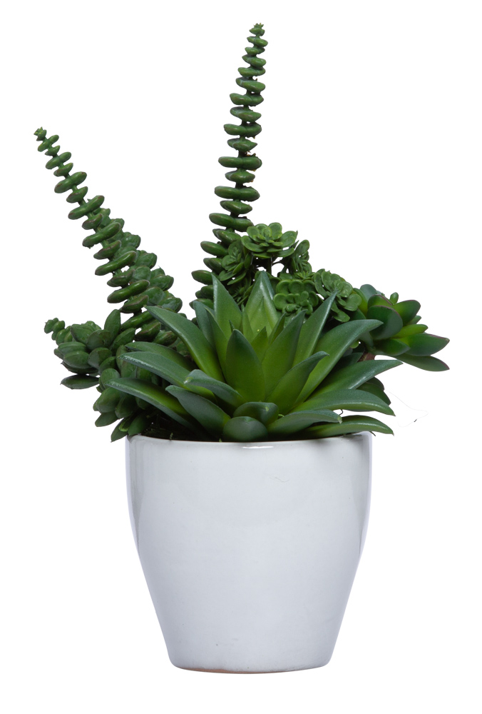 ASSORTED SUCCULENT IN WHITE POT