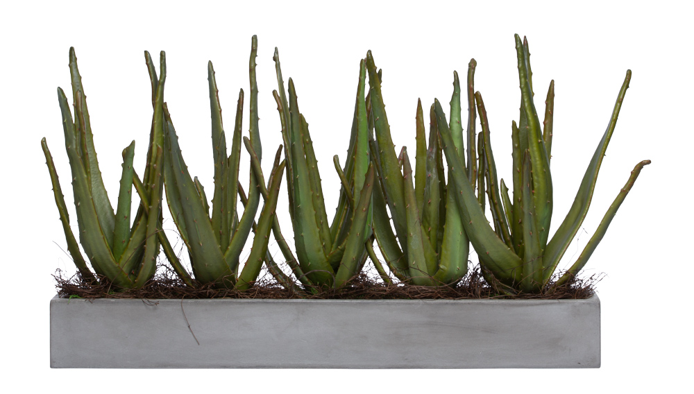 ALOE IN LARGE GREY PLANTER
