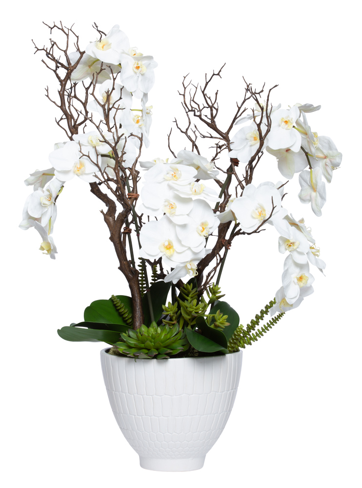 WHITE PHAL/SUCCULENT IN LARGE WHITE POT
