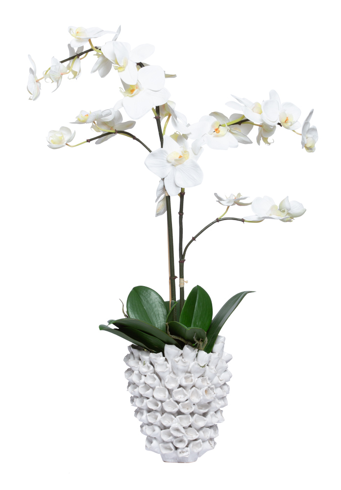WHITE PHAL IN SMALL BARNACLE VASE
