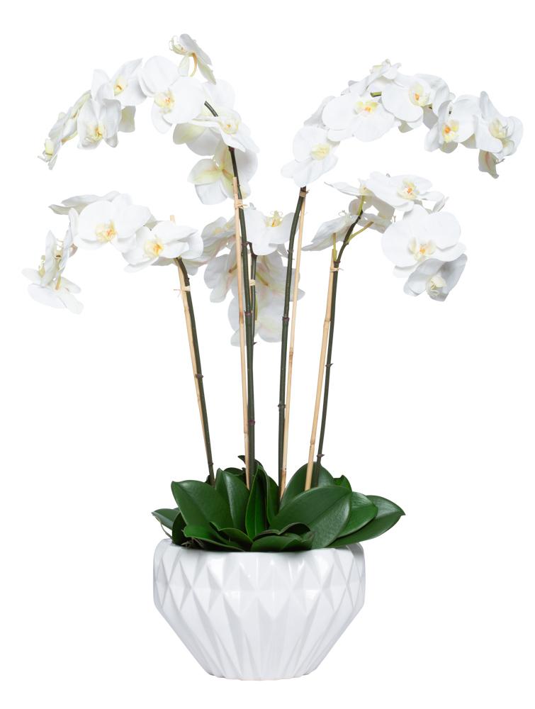 WHITE PHAL IN LARGE WHITE BOWL