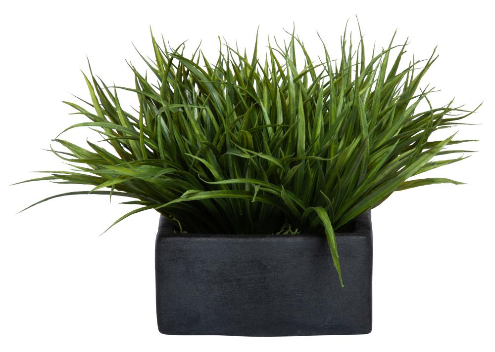 GRASS IN SMALL BLACK SQUARE POT