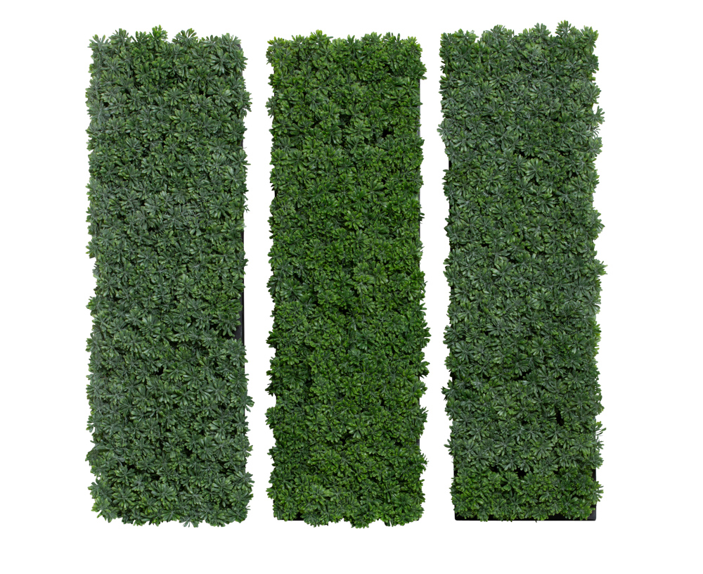 SET X 3 SUCCULENT/GRASS IN BLACK WALL HANGING BOX