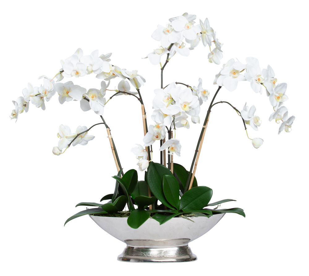 WHITE PHAL IN SMALL SILVER COMPOTE
