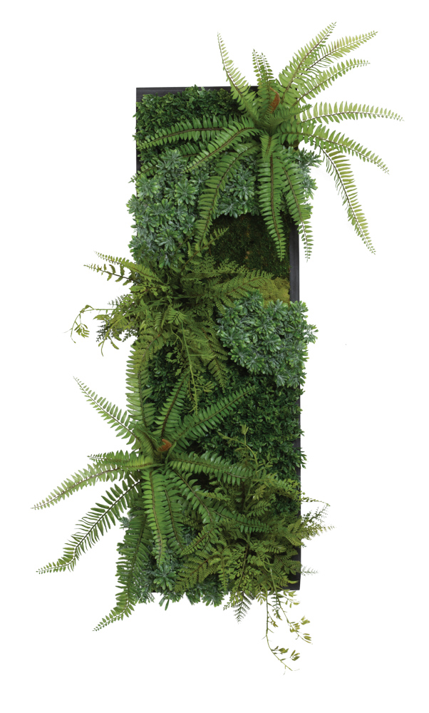 ASSORTED FERN/SUCCULENT IN BLACK WALL HANGING BOX