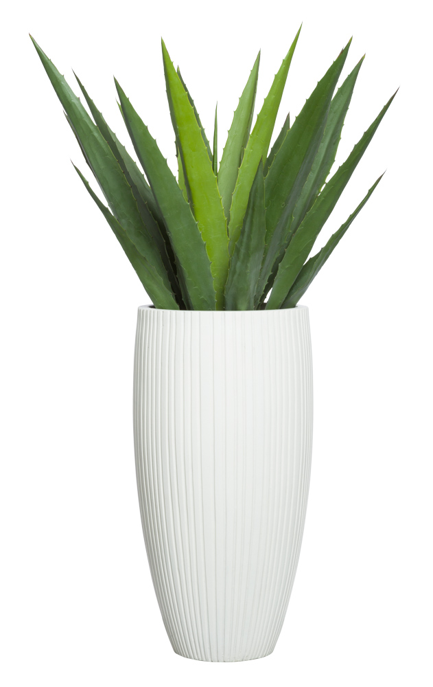 ALOE IN SMALL WHITE SANDSTONE RIBBED POT