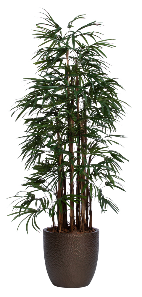 7' DELUXE LADY FINGER PALM/BASKET