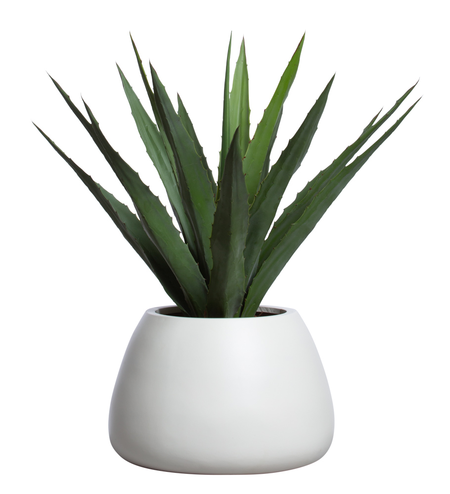 ALOE IN WHITE SANDSTONE SQUAT POT