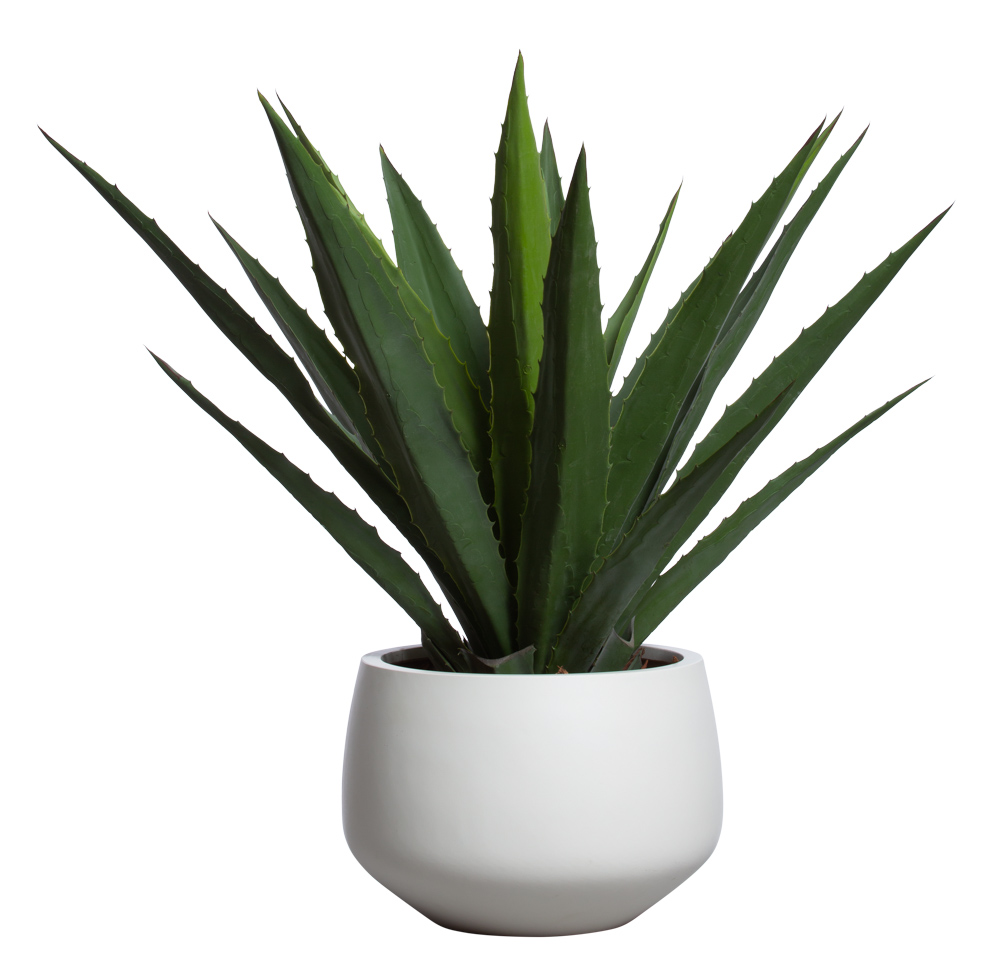 ALOE IN WHITE SANDSTONE BULB POT