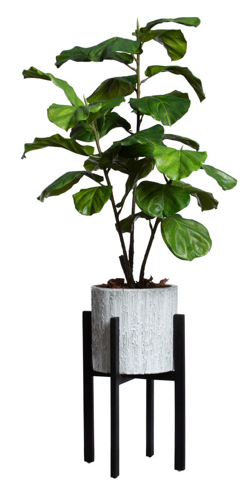 FIDDLE FIG BRANCH IN WHITE PLANT STAND