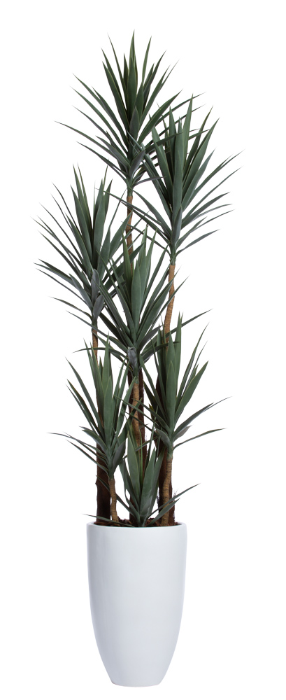 DELUXE YUCCA IN TALL ROUND SANDSTONE WHITE POT
