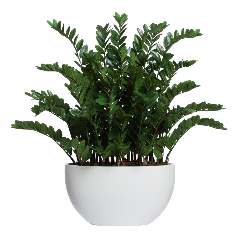 DELUXE ZAMIFOLIA IN WHITE SANDSTONE OVAL POT