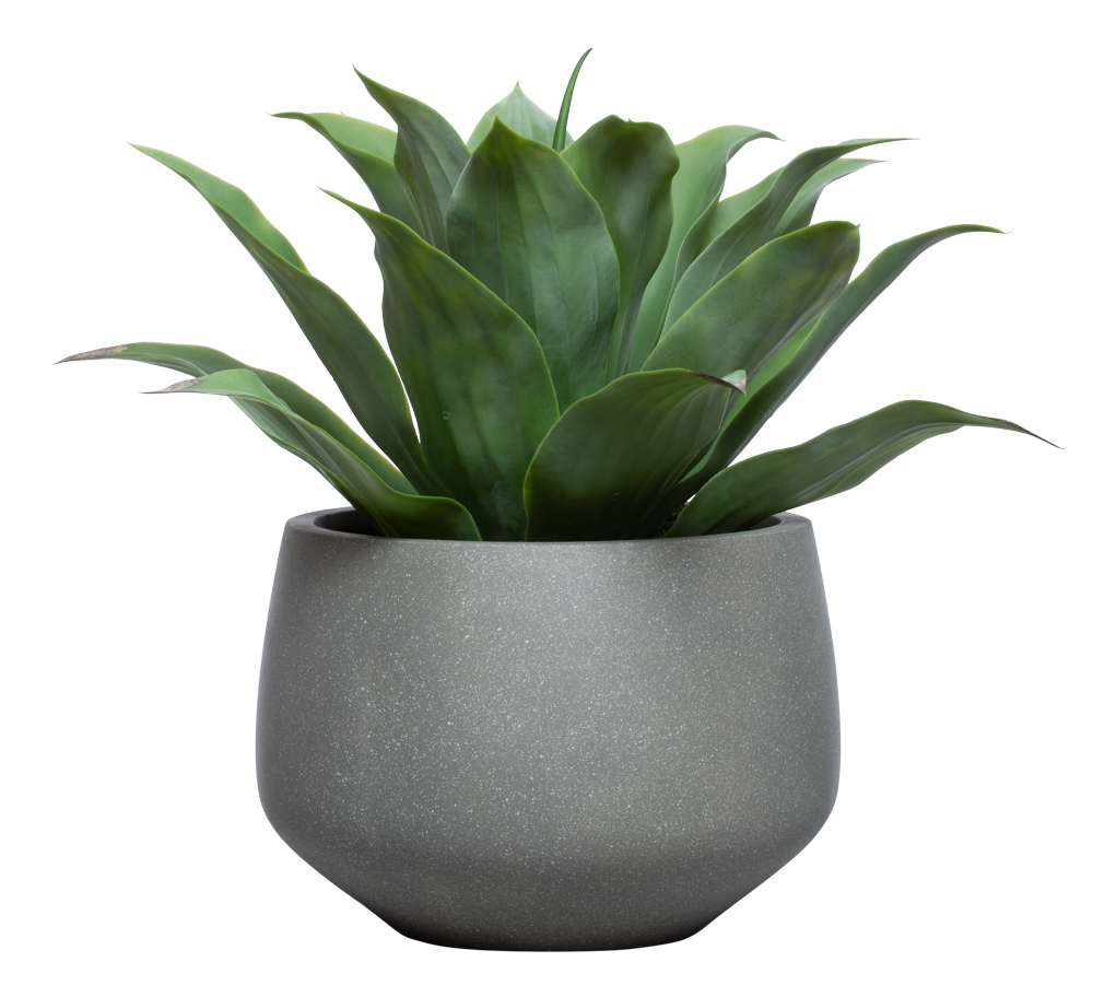 LARGE AGAVE IN GREYSTONE BULB POT