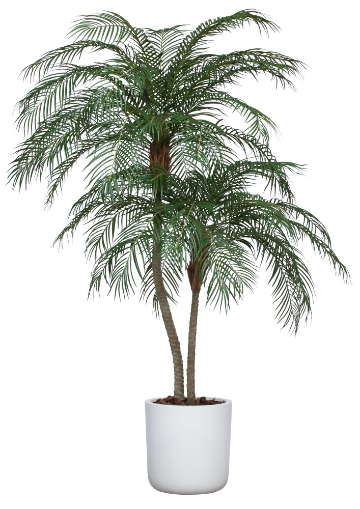8' UV DELUXE PHOENIX PALM IN WHITE SANDSTONE CYLINDER