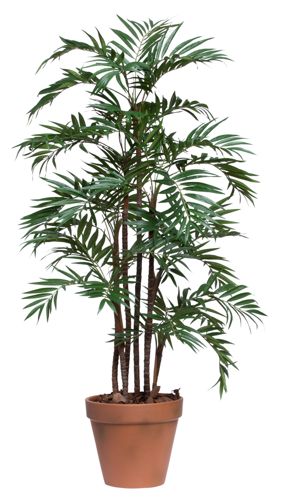 5' UV PARLOUR PALM IN TERRACOTTA POT