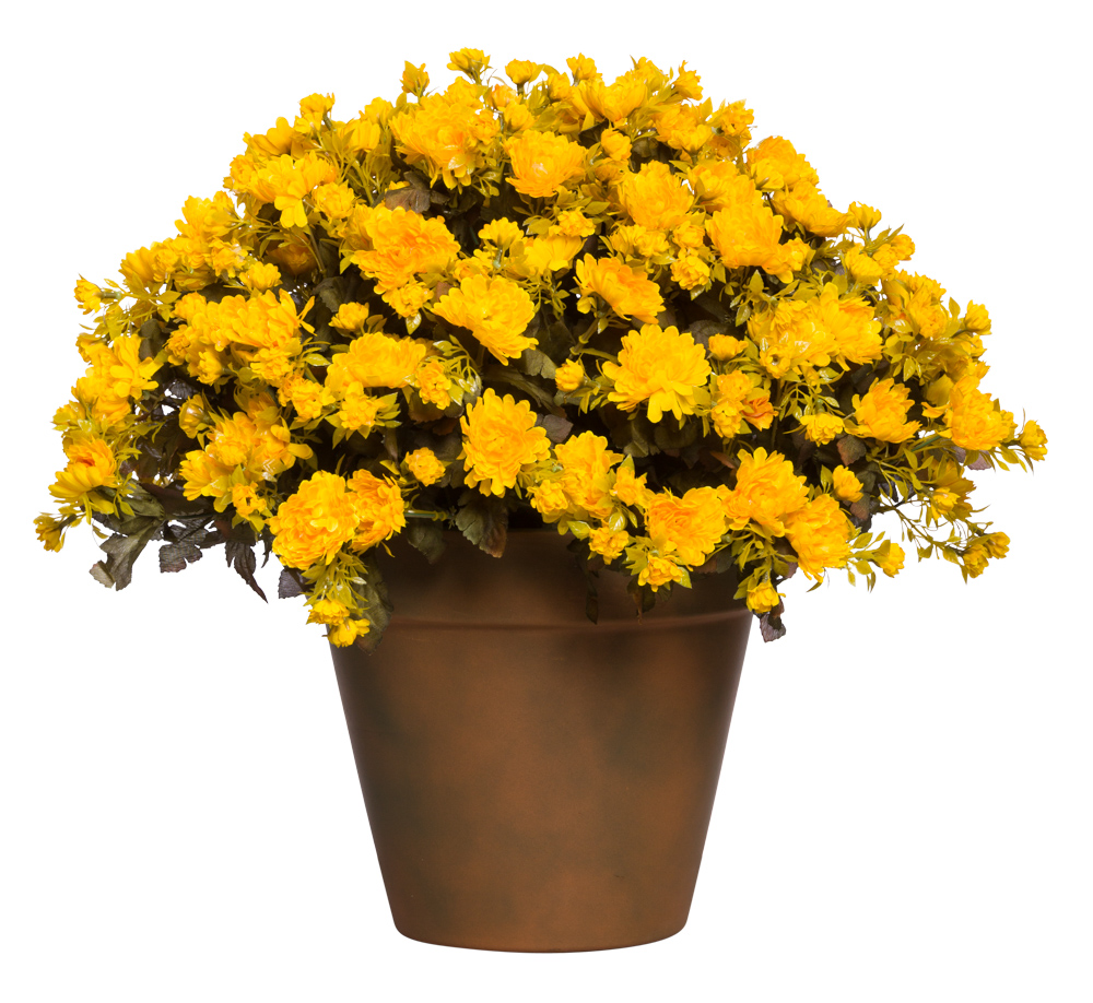 YELLOW MUM POT/MEDIUM