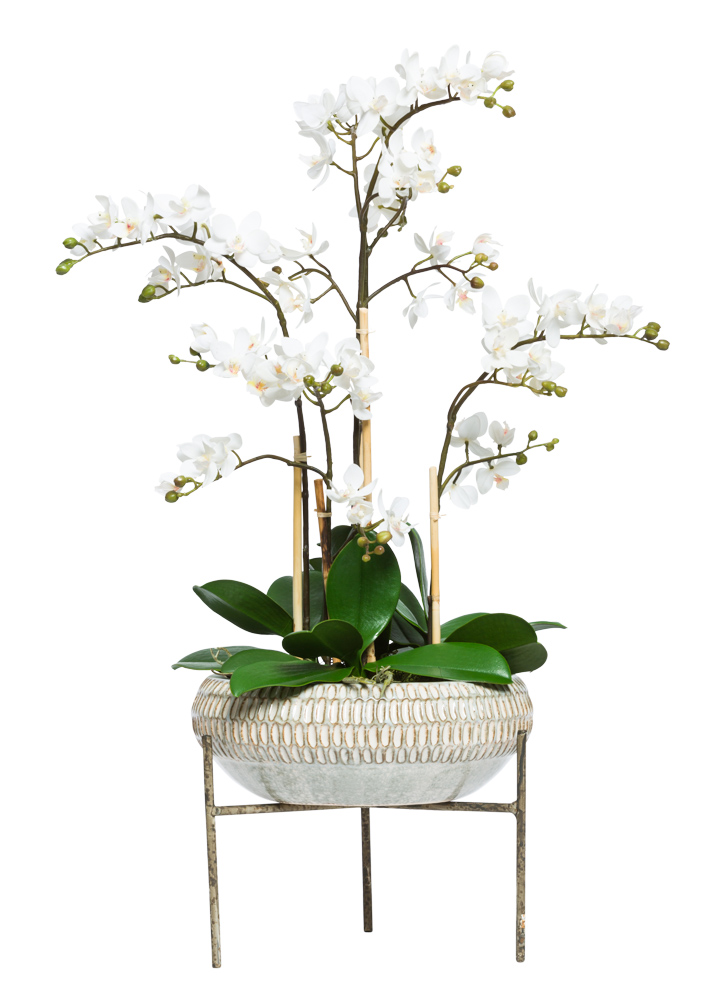 MINI PHAL IN LARGE PLANT STAND