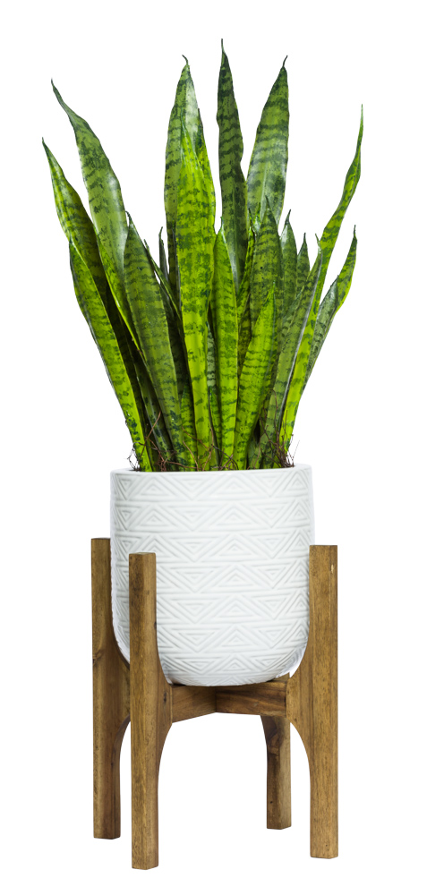 SNAKE PLANT IN SMALL WHITE TEXTURED STAND