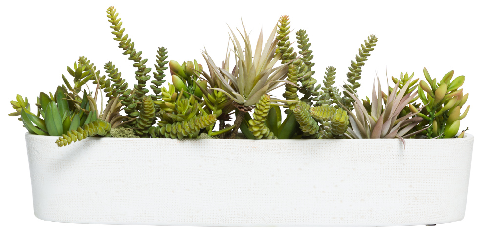 SUCCULENTS IN OVAL PLANTER