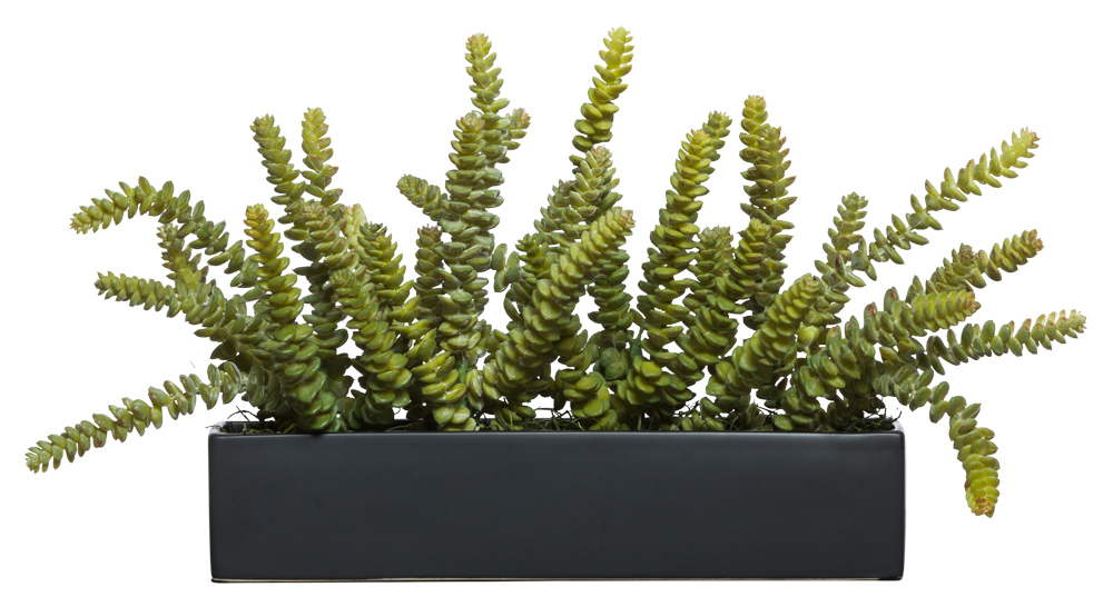 DONKEY TAIL IN BLACK PLANTER