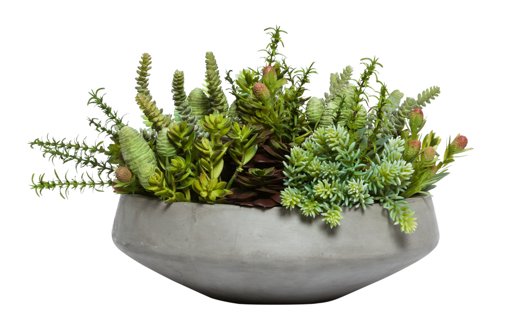 ASST SUCCULENT IN GREY BOWL