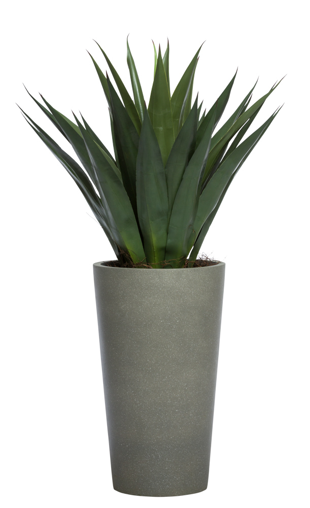 AGAVE IN TALL GREY POT