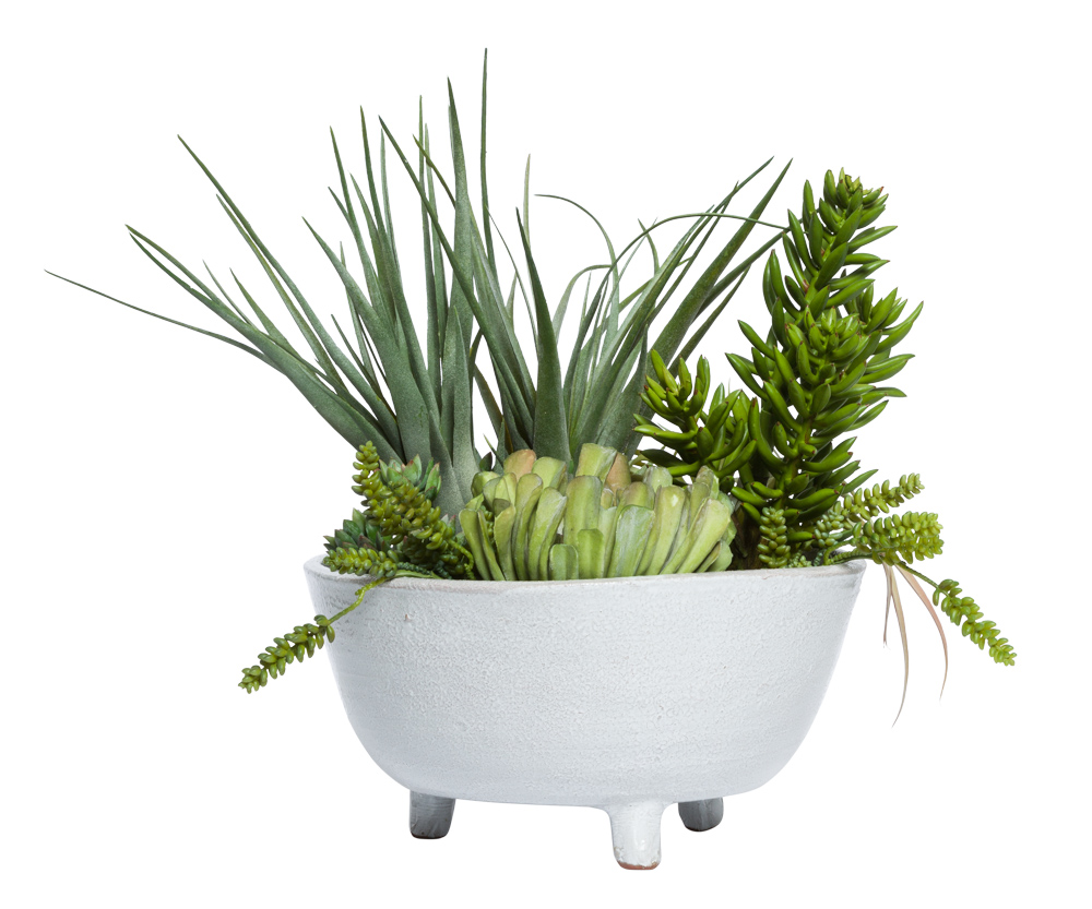 ASST SUCCULENTS IN WHITE BOWL