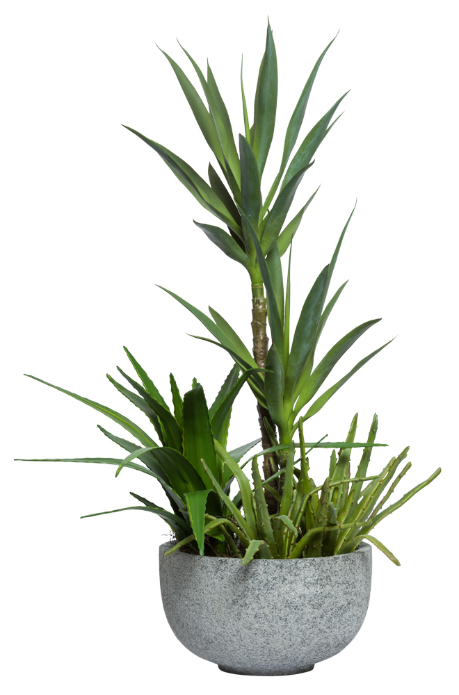 YUCCA COMBINATION IN GREYSTONE POT
