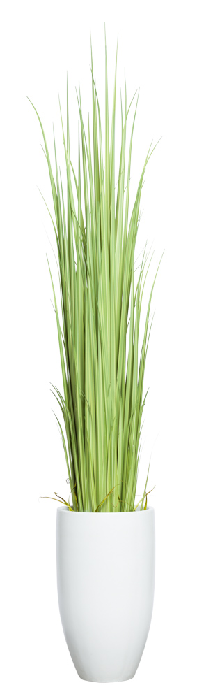 GLADIOLUS GRASS IN TALL WHITE POT