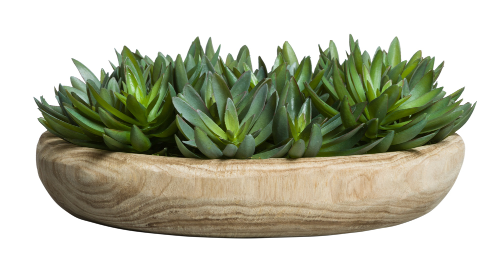 SUCCULENTS IN LARGE WOOD BOWL