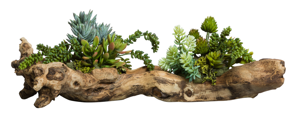 SUCCULENTS IN SMALL WOOD BRANCH