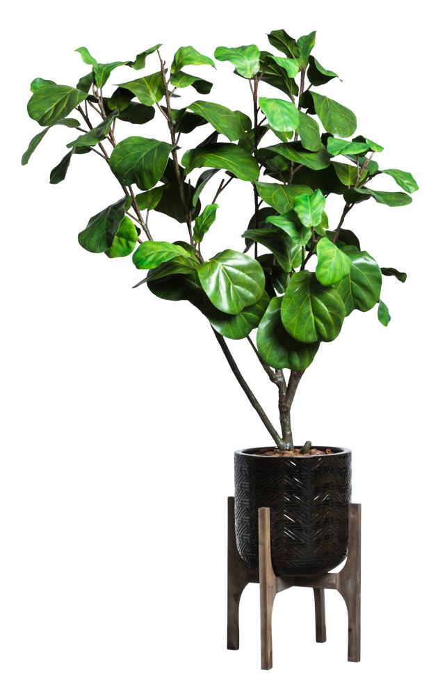FIDDLE FIG IN BLACK TEXTURED PLANT STAND