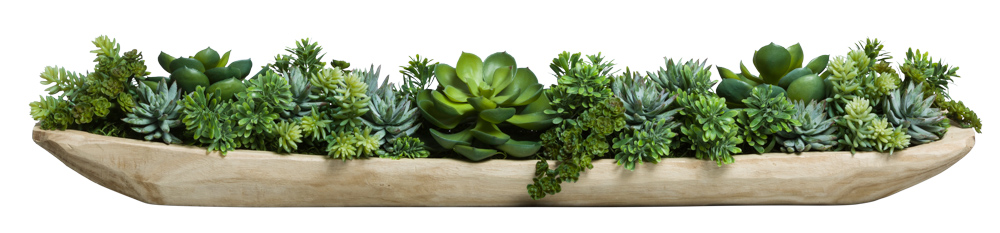 ASST SUCCULENT IN WOOD TRAY