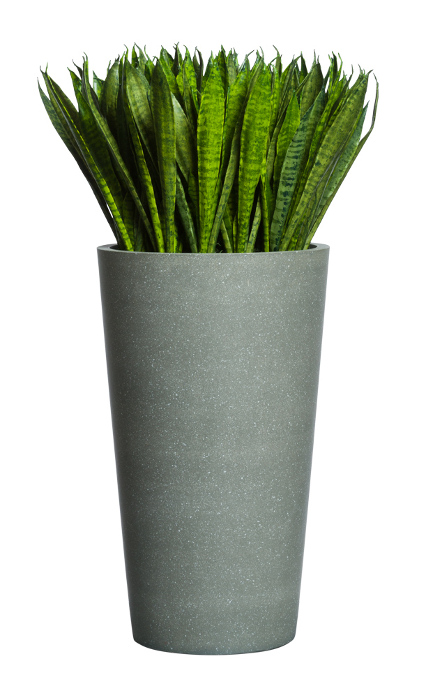 SNAKE PLANT IN SMALL GREY POT