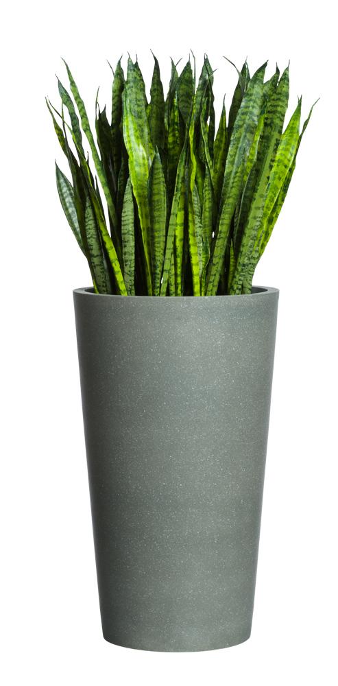 SNAKE PLANT IN LARGE GREY POT