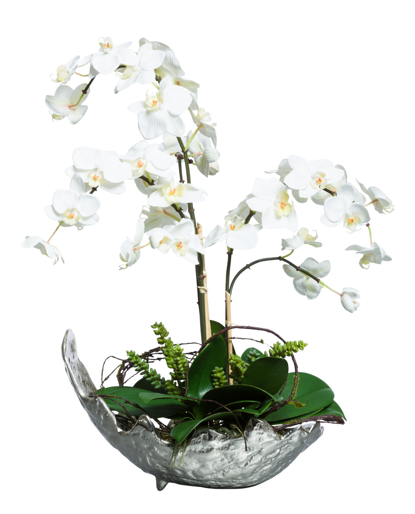 WHITE PHAL IN SMALL SILVER BOWL