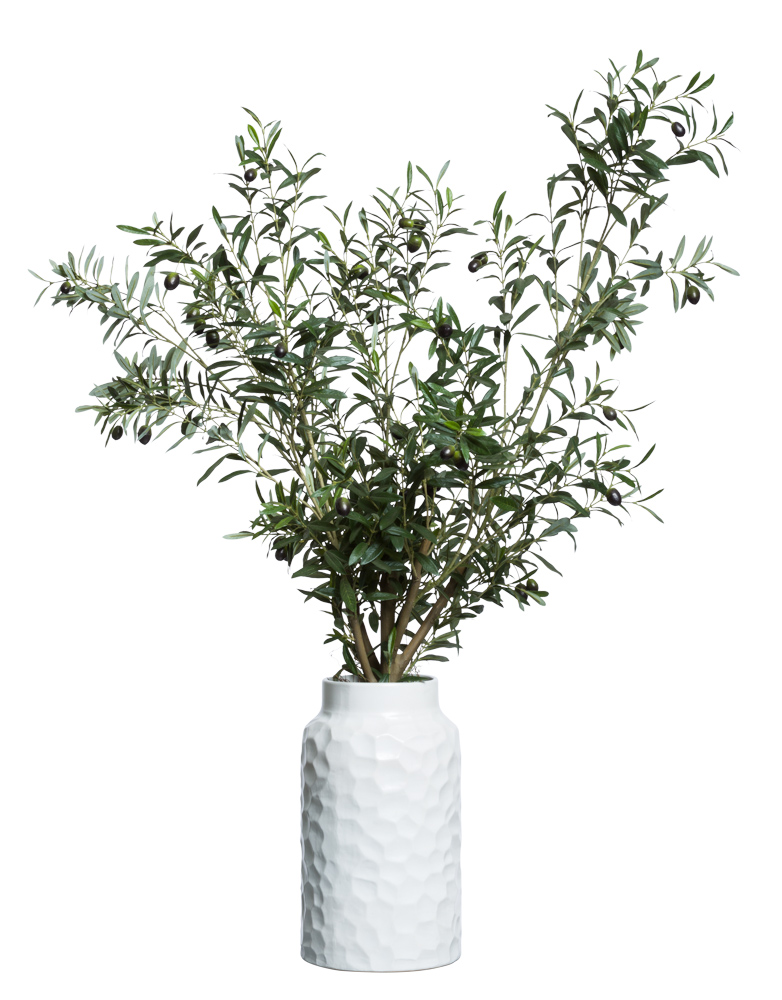 OLIVE TREE IN LARGE WHITE POT