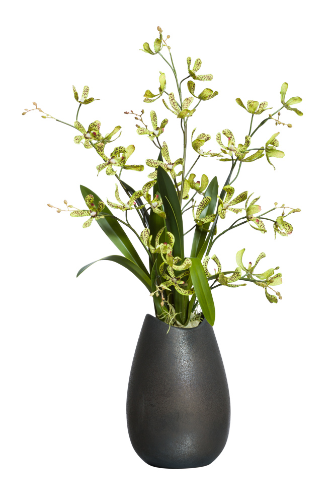 SPOTTED DENDROBIUM IN  BRONZE POT