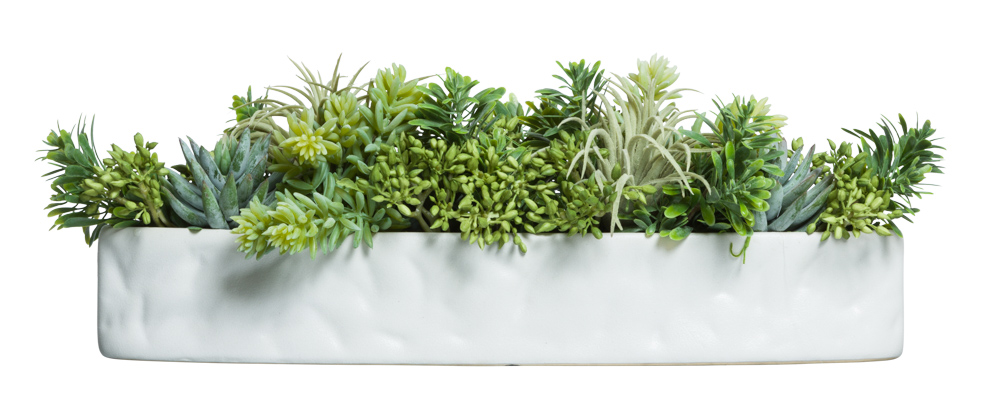 ASST SUCCULENT IN WHITE TEXTURED BOAT
