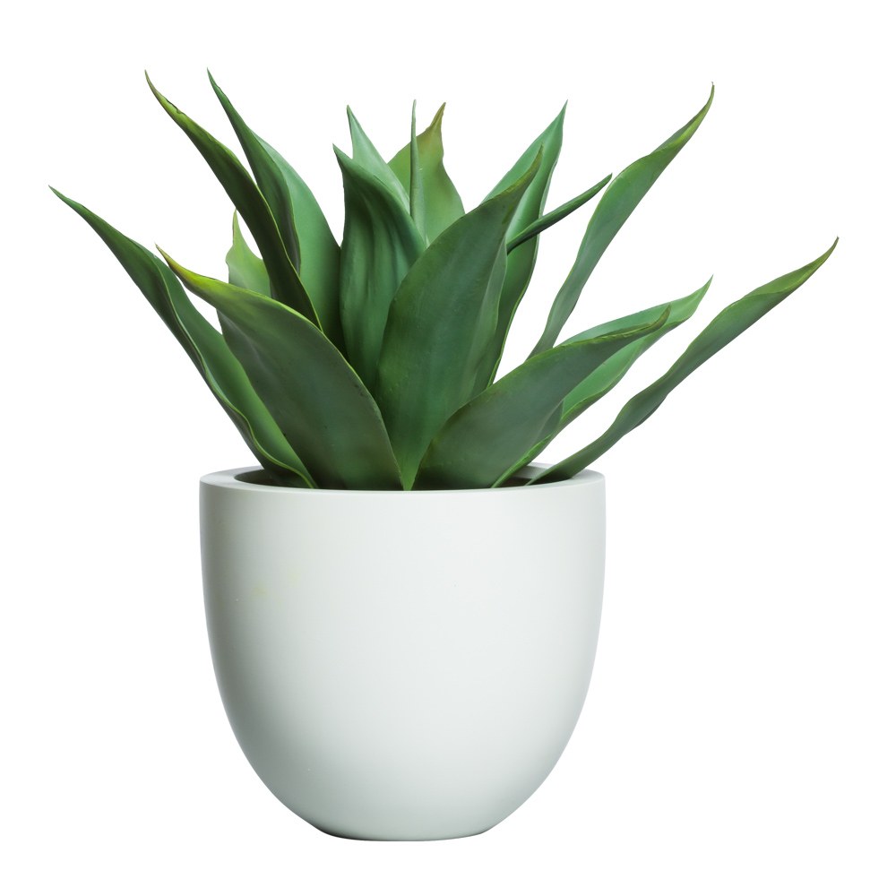 AGAVE IN SMALL ROUND TAPERED SANDSTONE POT ( THIS ITEM WILL BE AVAILABLE MID-NOVEMBER 2021 )