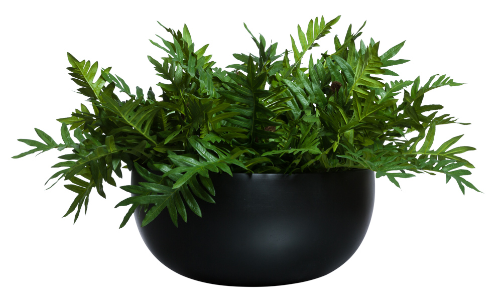 FERN IN LOW BLACK BOWL ( THIS ITEM WILL BE AVAILABLE IN MID-NOVEMBER 2021 )